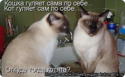 Котоматрица: Кошка гуляет сама по себе... Кот гуляет сам по себе.... Откуда тогда котята?.