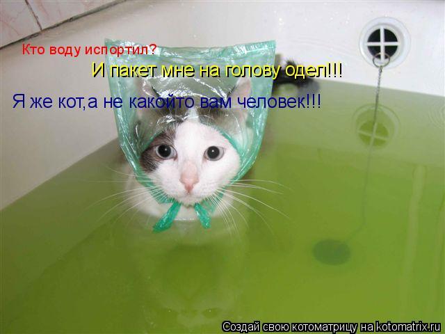 Котоматрица: Кто воду испортил? И пакет мне на голову одел!!! Я же кот,а не какойто вам человек!!!