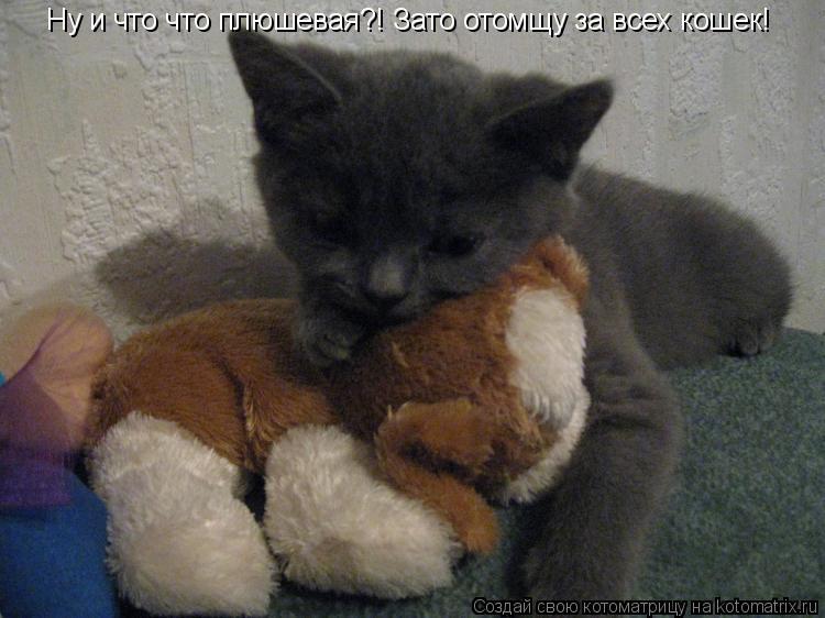 Котоматрица: Ну и что что плюшевая?! Зато отомщу за всех кошек!