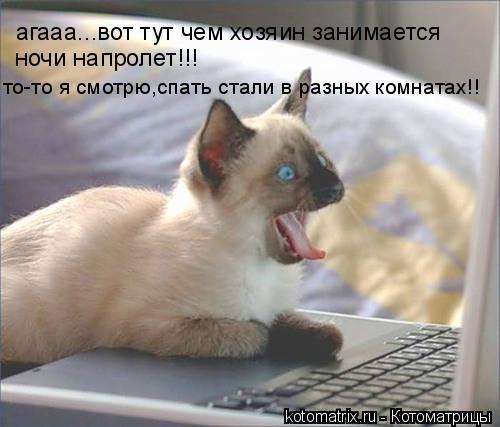 Котоматрица: агааа...вот тут чем хозяин занимается ночи напролет!!! то-то я смотрю,спать стали в разных комнатах!!