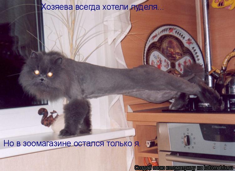 Котоматрица: Хозяева всегда хотели пуделя... Но в зоомагазине остался только я.