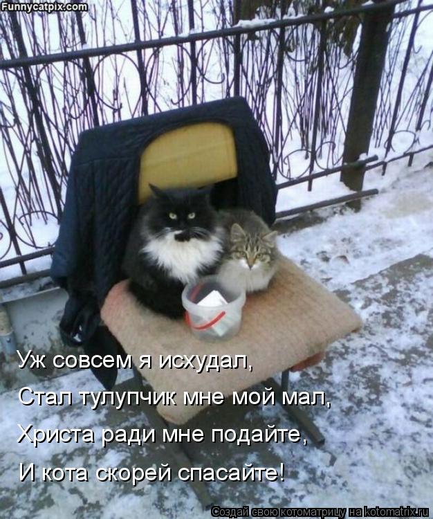 Котоматрица: Уж совсем я исхудал, Стал тулупчик мне мой мал, Христа ради мне подайте, И кота скорей спасайте!
