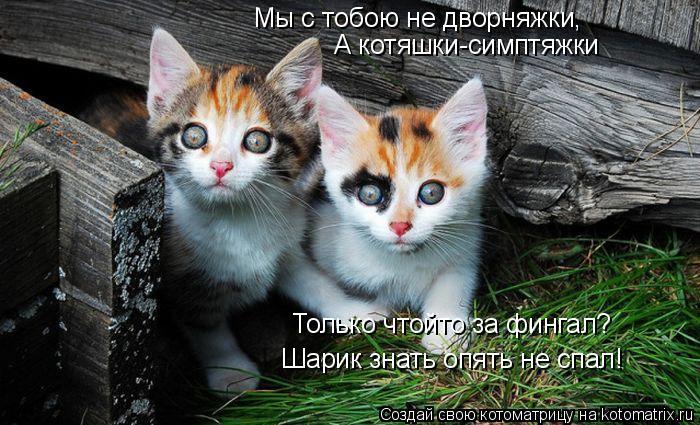 Котоматрица: Мы с тобою не дворняжки, А котяшки-симптяжки Только чтойто за фингал? Шарик знать опять не спал!