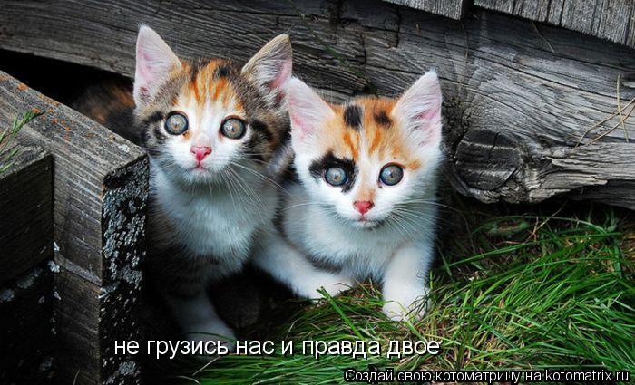 Котоматрица: не грузись нас и правда двое