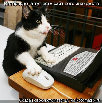 Котоматрица: Интересно, а тут есть сайт кото-знакомств