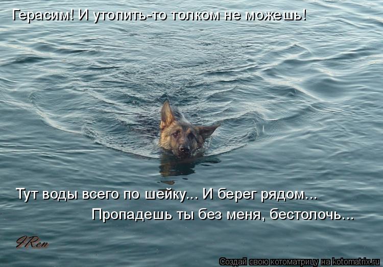 Котоматрица: Герасим! И утопить-то толком не можешь! Тут воды всего по шейку... И берег рядом... Пропадешь ты без меня, бестолочь...