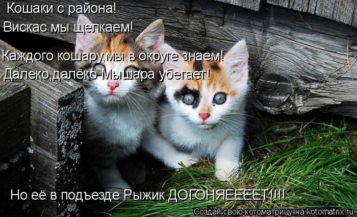 Котоматрица: Кошаки с района! Вискас мы щелкаем! Каждого кошару,мы в округе знаем! Далеко,далёко Мышара убегает! Но её в подъезде Рыжик ДОГОНЯЕЕЕЕТ!!!!