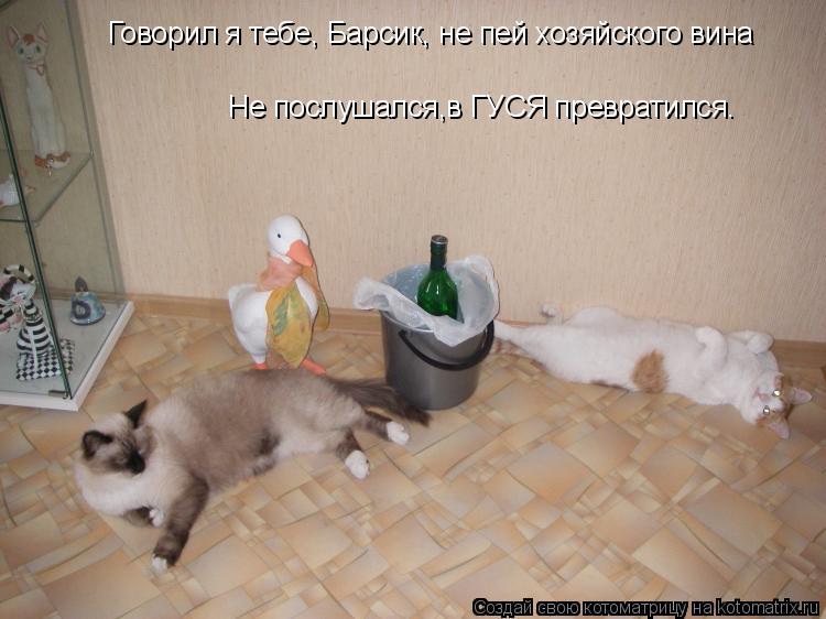 Котоматрица: Говорил я тебе, Барсик, не пей хозяйского вина Не послушался,в ГУСЯ превратился…