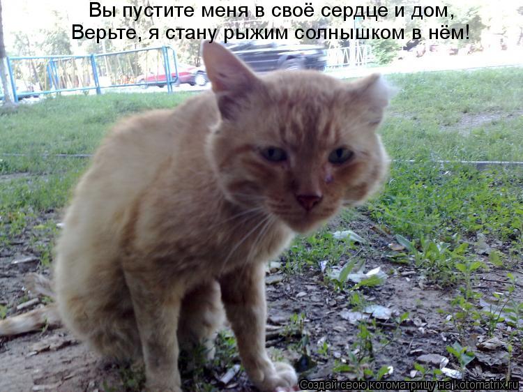 Котоматрица: Вы пустите меня в своё сердце и дом, Верьте, я стану рыжим солнышком в нём!