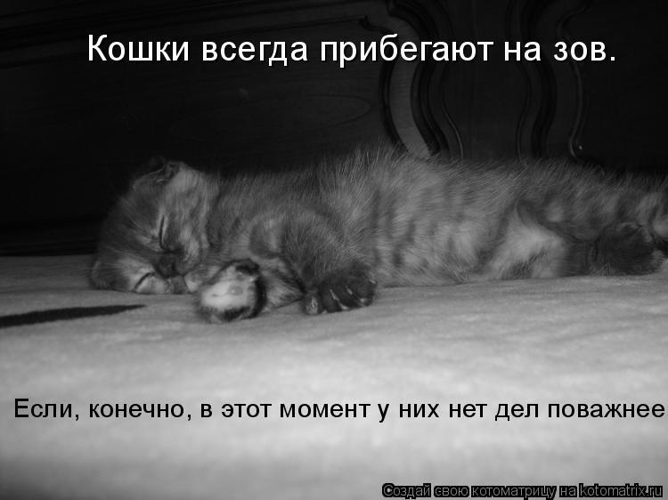 Котоматрица: Кошки всегда прибегают на зов. Если, конечно, в этот момент у них нет дел поважнее.