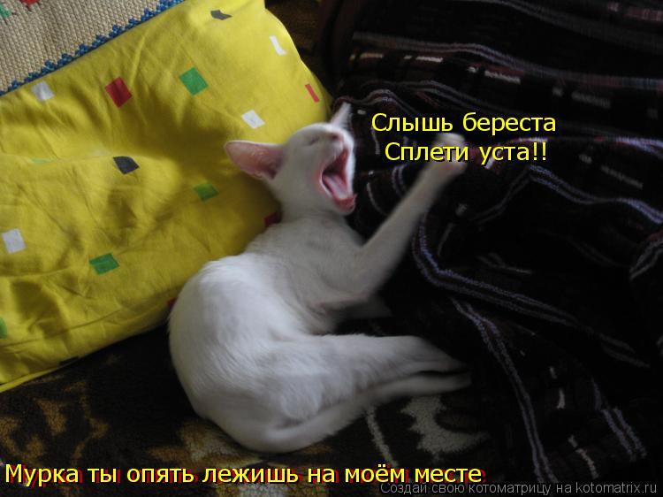 Котоматрица: Мурка ты опять лежишь на моём месте Слышь береста Сплети уста!! Мурка ты опять лежишь на моём месте