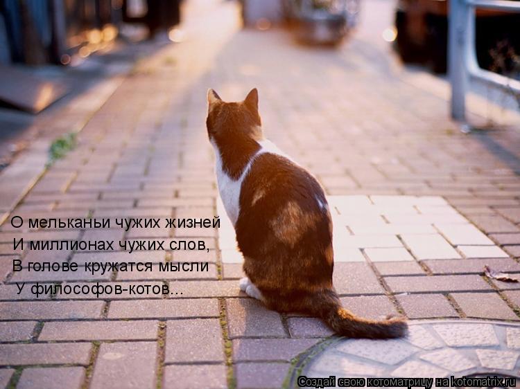 Котоматрица: О мельканьи чужих жизней И миллионах чужих слов, В голове кружатся мысли   У философов-котов...