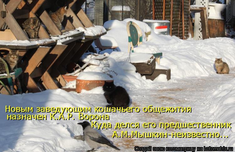 Котоматрица: Новым заведующим кошачьего общежития назначен К.А.Р. Ворона Куда делся его предшественник А.М.Мышкин-неизвестно...