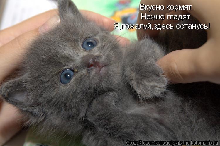 Котоматрица: Вкусно кормят. Нежно гладят. Я,пожалуй,здесь останусь!