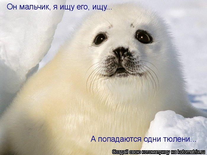 Котоматрица: Он мальчик, я ищу его, ищу... А попадаются одни тюлени...