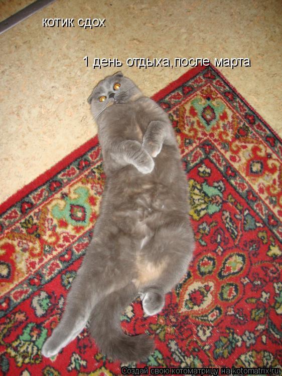 Котоматрица: котик сдох 1 день отдыха,после марта