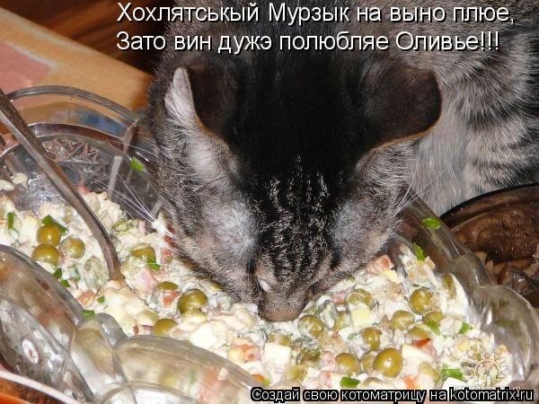 Котоматрица: Хохлятськый Мурзык на выно плюе, Зато вин дужэ полюбляе Оливье!!!