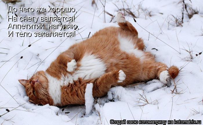 Котоматрица: До чего же хорошо, На снегу валяется! Аппетитик  нагуляю, И тело закаляется!