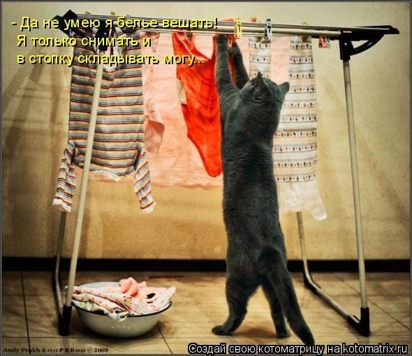 Котоматрица: - Да не умею я белье вешать! Я только снимать и  в стопку складывать могу...