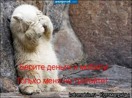Котоматрица: Берите деньги и мобилу! Только меня не трогайте!