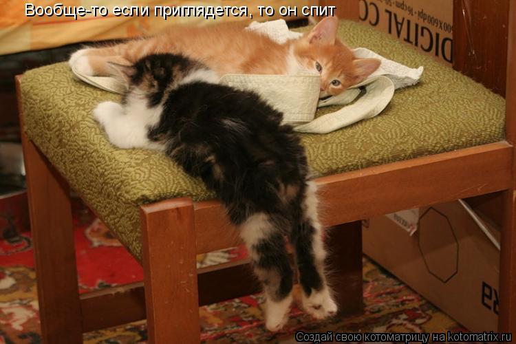 Котоматрица: Вообще-то если приглядется, то он спит