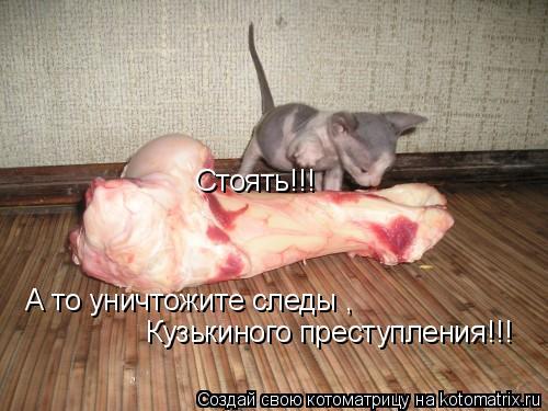 Котоматрица: Стоять!!!  А то уничтожите следы , Кузькиного преступления!!!