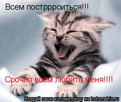 Котоматрица: Всем постррроиться!!! Срочно всем любить меня!!!!
