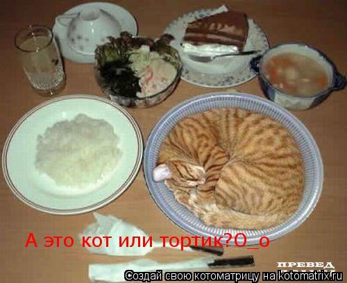 Котоматрица: А это кот или тортик?О_о