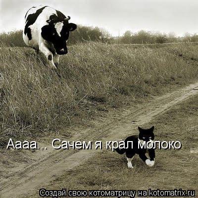 Котоматрица: Аaaa... Сачем я крал молоко