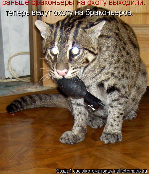 Котоматрица: раньше браконьеры на охоту выходили. теперь ведут охоту на браконьеров.
