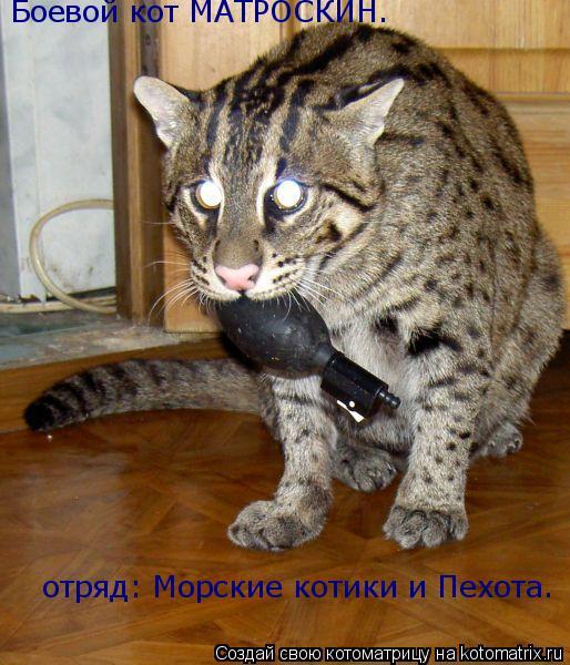 Котоматрица: Боевой кот МАТРОСКИН. отряд: Морские котики и Пехота.