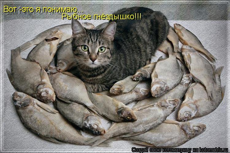 Котоматрица: Вот -это я понимаю...  Рыбное гнёздышко!!!