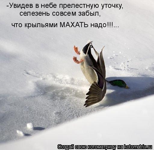 Котоматрица: -Увидев в небе прелестную уточку,  селезень совсем забыл, что крыльями МАХАТЬ надо!!!...