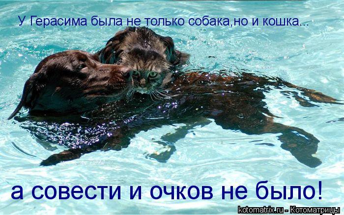 Котоматрица: У Герасима была не только собака,но и кошка... а совести и очков не было!