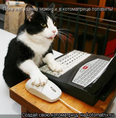 Котоматрица: Пока нет хозяев можно и в котоматрице полазить!