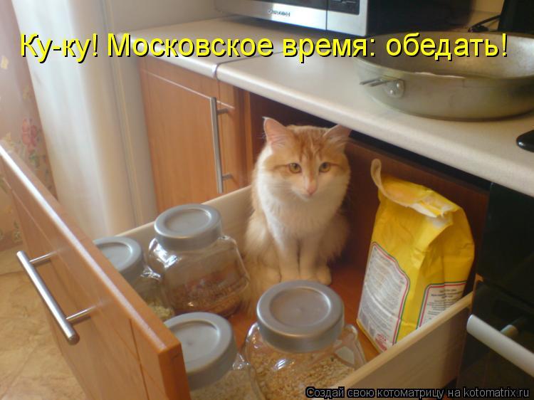 Котоматрица: Ку-ку! Московское время: обедать!