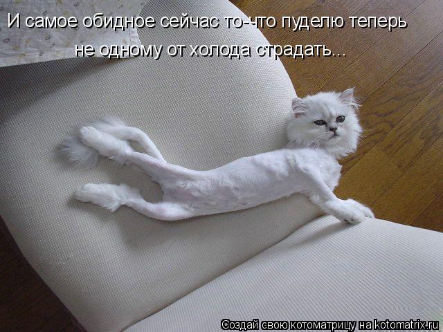 Котоматрица: И самое обидное сейчас то-что пуделю теперь не одному от холода страдать...