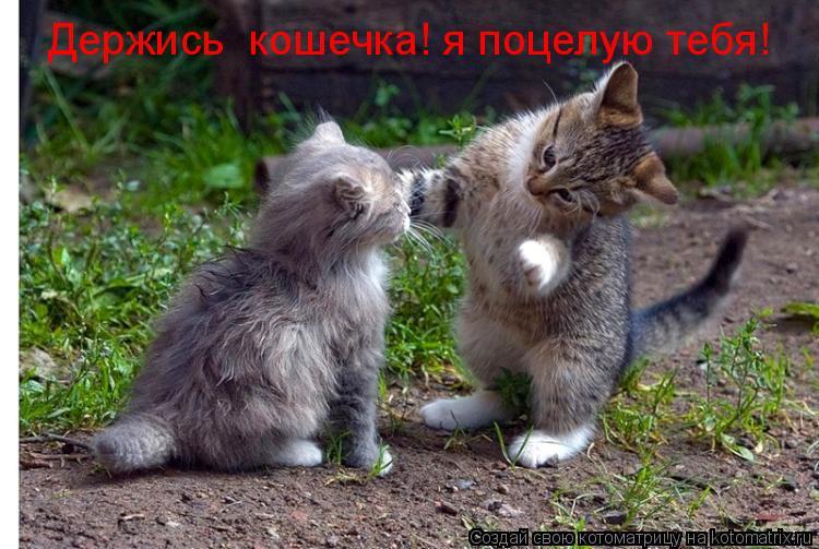 Котоматрица: Держись  кошечка! я поцелую тебя!