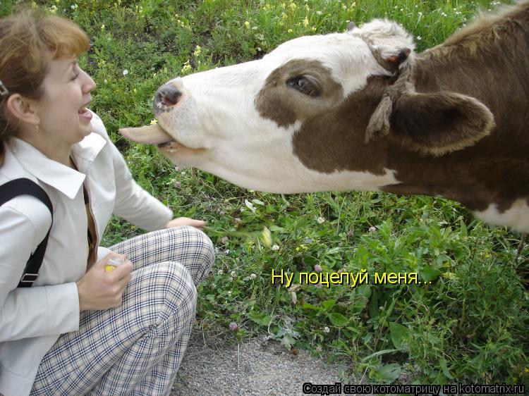 Котоматрица: Ну поцелуй меня...