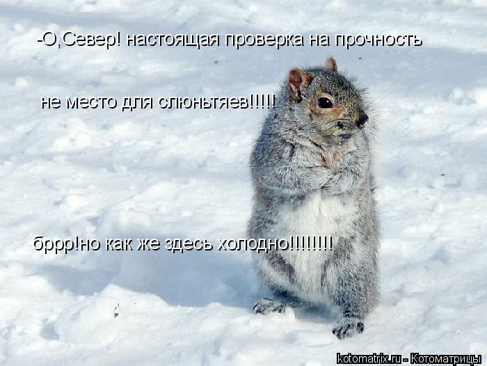 Котоматрица: -О,Север! настоящая проверка на прочность  не место для слюньтяев!!!!! бррр!но как же здесь холодно!!!!!!!!