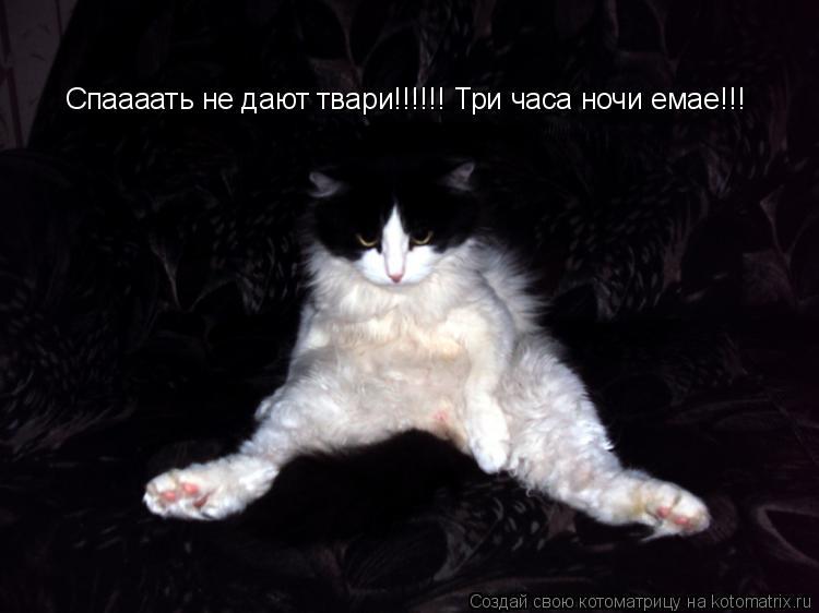 Котоматрица: Спаааать не дают твари!!!!!! Три часа ночи емае!!!