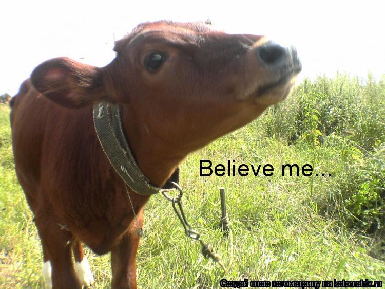 Котоматрица: Believe me...