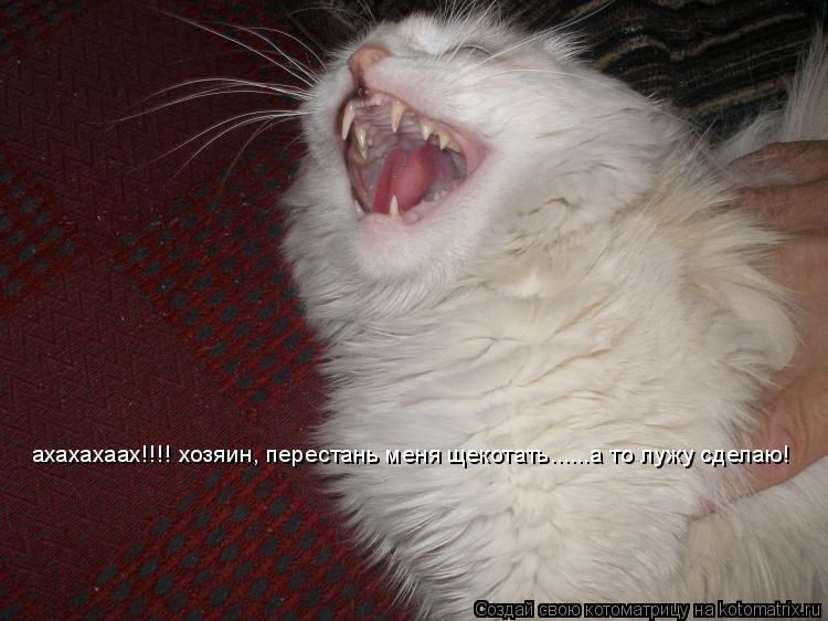 Котоматрица: ахахахаах!!!! хозяин, перестань меня щекотать......а то лужу сделаю!