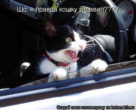 Котоматрица: Шо, я правда кошку задавил????