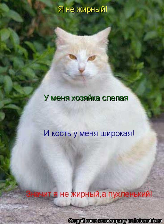 Котоматрица: Я не жирный! У меня хозяйка слепая И кость у меня широкая! Значит я не жирный,а пухленький!
