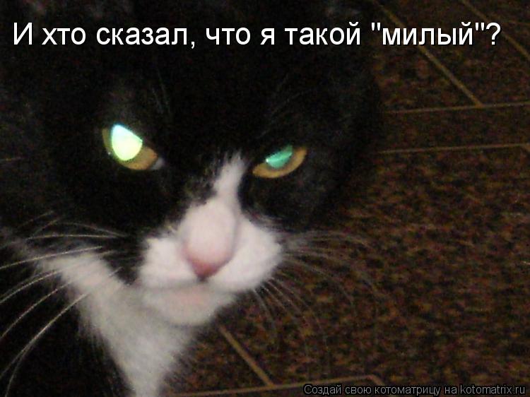 """Котоматрица: И хто сказал, что я такой """"милый""""?"""