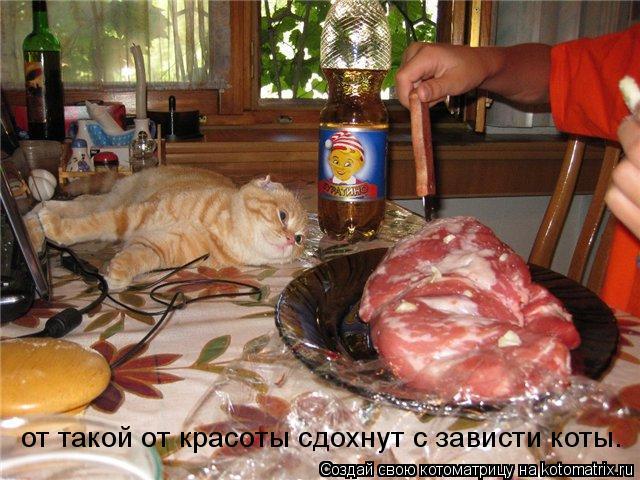 Котоматрица: от такой от красоты сдохнут с зависти коты.