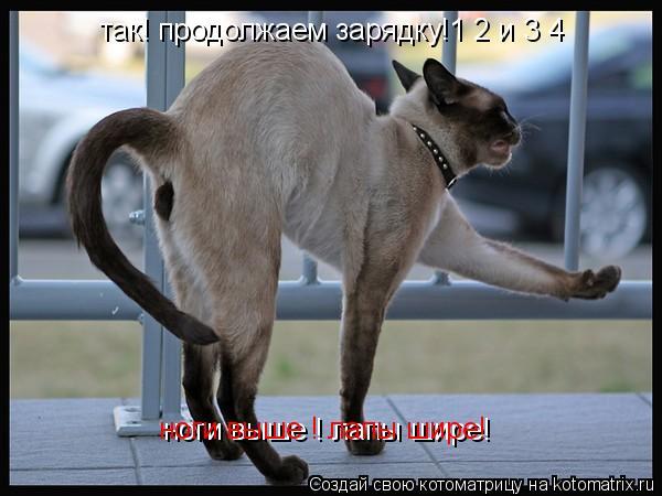Котоматрица: так! продолжаем зарядку!1 2 и 3 4 ноги выше ! лапы шире! ноги выше ! лапы шире!