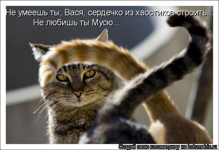 Котоматрица: Не умеешь ты, Вася, сердечко из хвостиков строить... Не любишь ты Мусю...