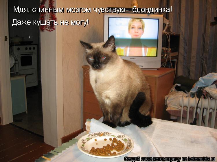 Котоматрица: Мдя, спинным мозгом чувствую - блондинка! Даже кушать не могу!